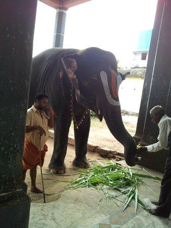 Uppiliappan Temple, Kumbakonam: elephant