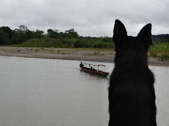 Anaconda Lodge Ecuador: Orion, our Black Solid German Shepard waiting our Guest that are arriving to the Lodge!