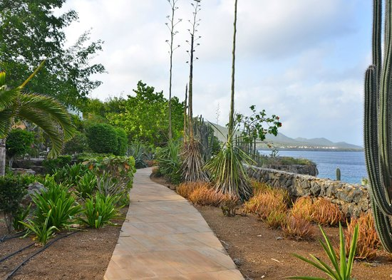 Kura Hulanda Lodge & Beach Club: Walking on hotel grounds