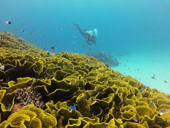 Ulunikoro Marine Conservation Area: Coral formation diving