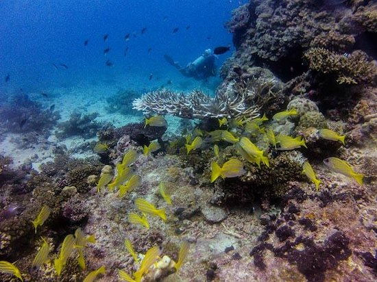 Ulunikoro Marine Conservation Area: Coral formations and fish