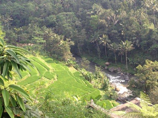 Kupu Kupu Barong Villas and Tree Spa : Magnifique vue
