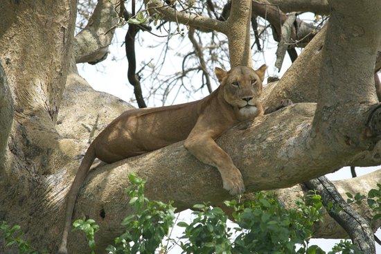 Kabarole Tours and Safaris