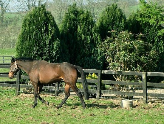 Eden Hill House : One of our horses