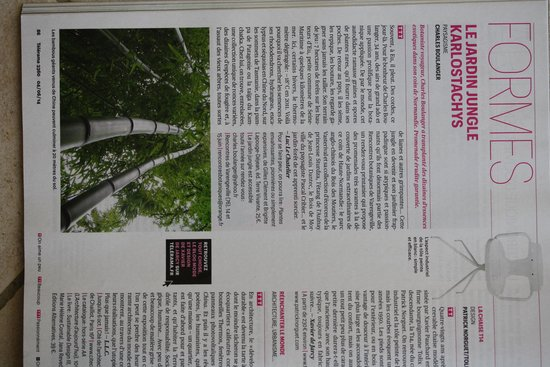 Jungle Garden Karlostachys: Jardin jungle dans le Telerama