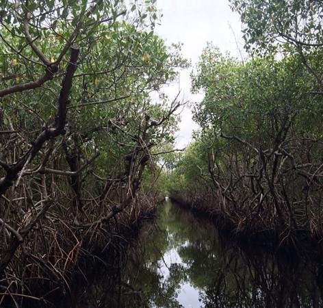 Captain Jack's Airboat Tours: Light at the end of the mangrove tunnel