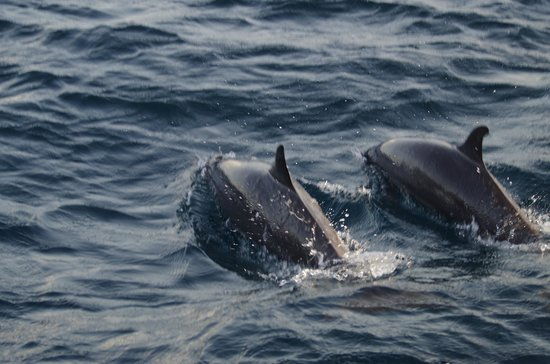 Kurumba Maldives: Sunset dolphin cruise