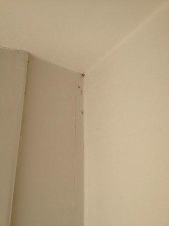 Relais Villa Buonanno: tote Insekten / nicht sauber gereinigtes Zimmer (Decke)