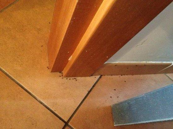Relais Villa Buonanno: Ameisenbefall im Bad (Türe Bad/Zimmer)