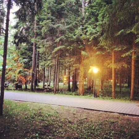 Istra Holiday : Лес