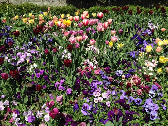 Temple Square: Tulips, Tulips Everywhere!