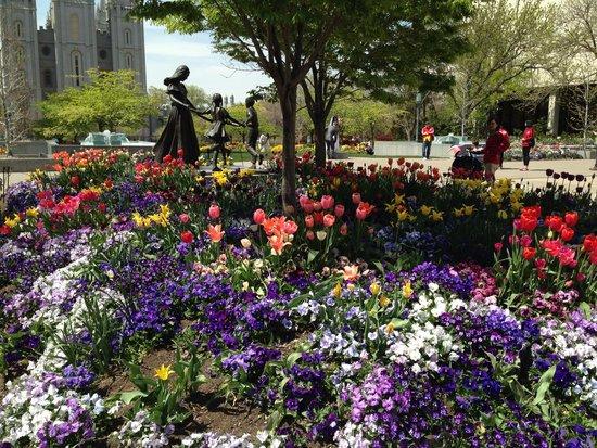 Temple Square : Beautiful Tulips