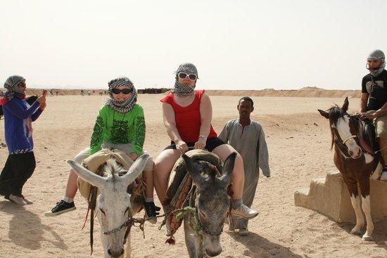 Sahara Desert : смешные ослики