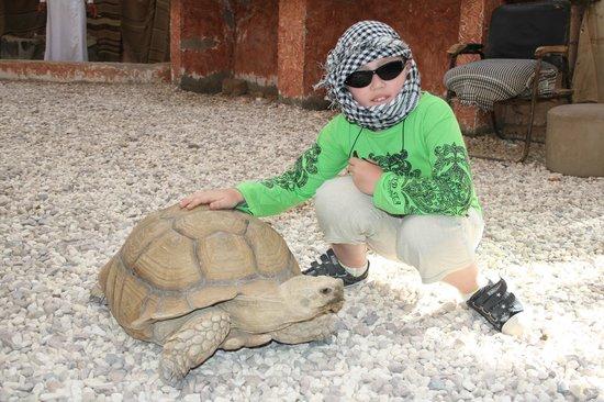 Sahara Desert : привет большая черепаха