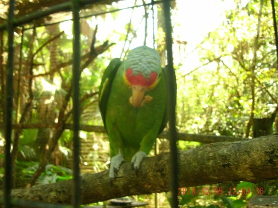 The Belize Zoo : Just one picture of the awesome birds we saw