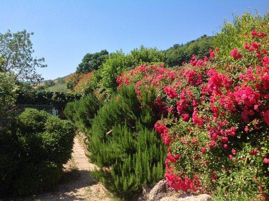 Agriturismo Santa Caterina : sentiero