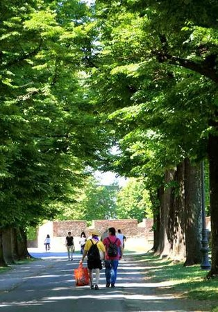 Le mura di Lucca : strolling the tree-lined walls