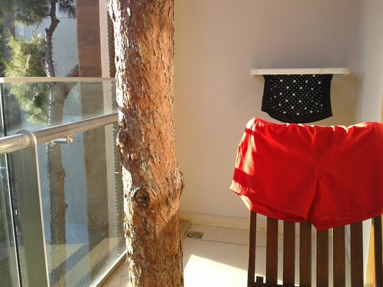 Voyage Sorgun: Tree growing through our Balcony