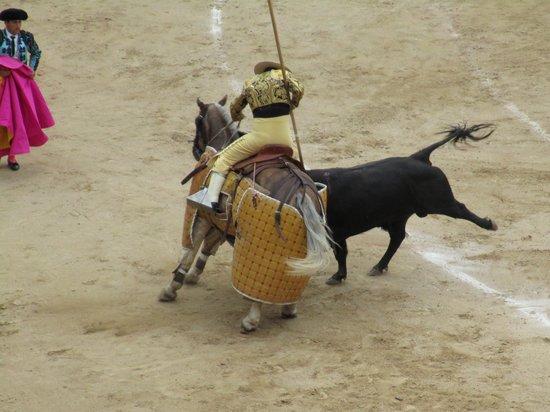 Plaza de Toros las Ventas: Picador