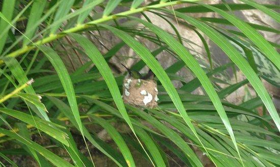Bel Jou Hotel: Hummingbird nesting in hotel grounds