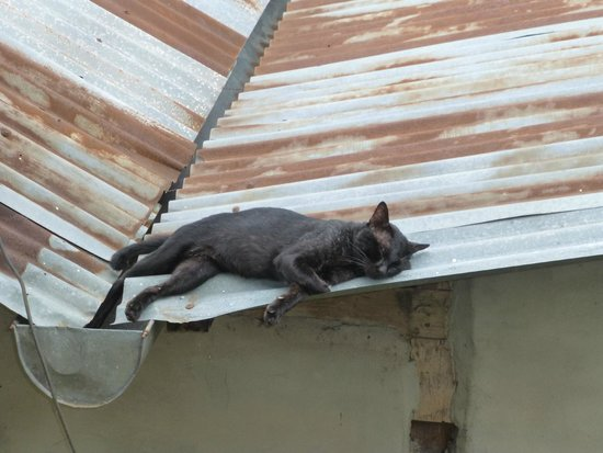 Villa Lao Wooden House: A cat on a hot tin roof.