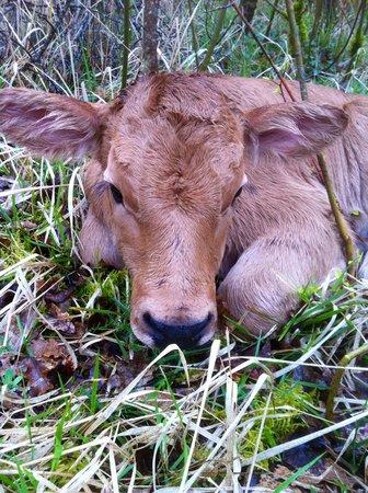 Agriturismo Santa Caterina : vitella