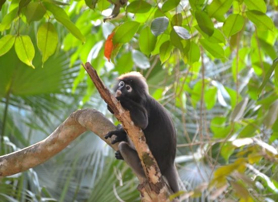 The Andaman, A Luxury Collection Resort: Monkey :-)