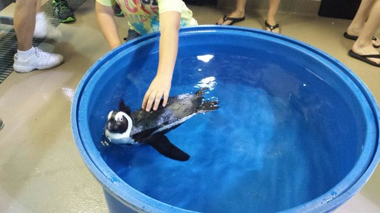 The Florida Aquarium : Penguin interaction extra $30 and worth it