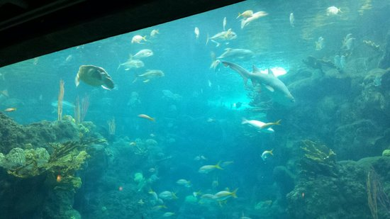The Florida Aquarium : Sharks