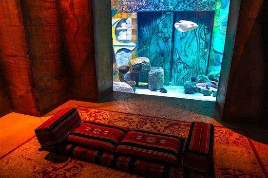 The Lost Chambers Aquarium: AQUARIUM 01
