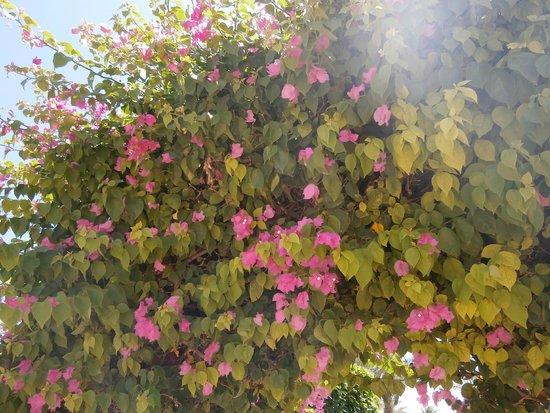Sultan Beach Hotel: flowers
