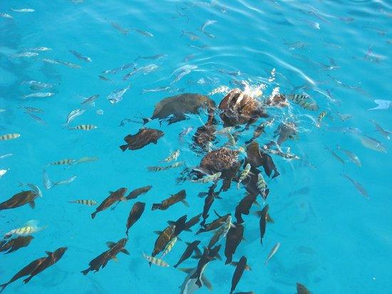 Îles Giftoun : Рыбки около строва Малый Гифтун