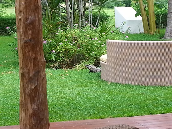 Laguna Suites Golf & Spa : A visitor during breakfast one morning.
