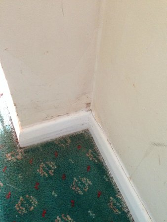 Sand Bay Leisure Resort: Don't know which is worst the filthy carpet or paint on the carpet