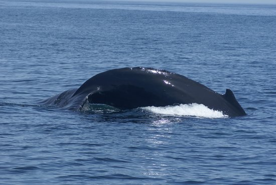 Capt Bill & Sons Whale Watch: wow