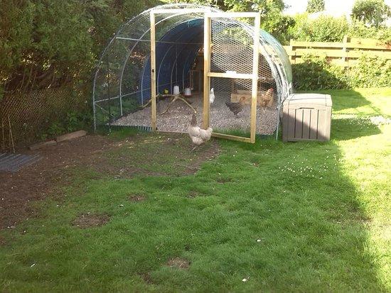 Galvelbeg House: free range hens provide eggs for breakfast