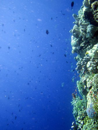 Bunaken Island Resort: First view of the wall reef!