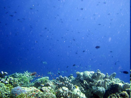 Bunaken Island Resort: First view of the wall reef!