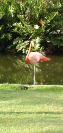 Bavaro Princess All Suites Resort, Spa & Casino: Flamingo