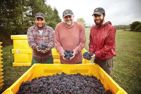 L. Mawby Vineyards: Harvest time in Leelanau.