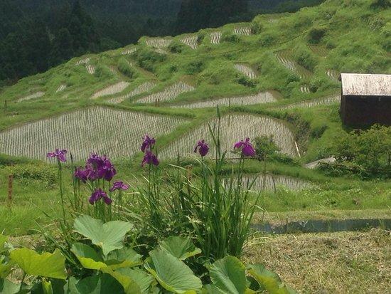 Maruyama Senmai Rice Field: ちょうど、アヤメが咲いていて、棚田が背景!
