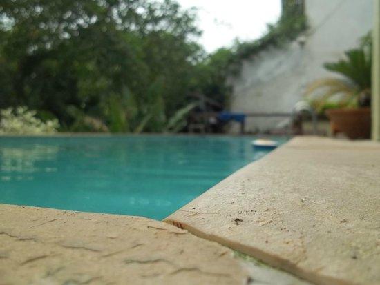 Casa Yellow Buzios Hostel : Piscina