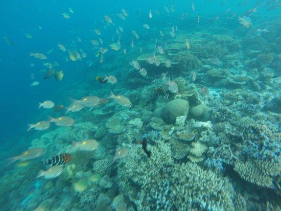 Maafushivaru: snorkeling