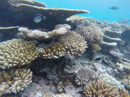 Maafushivaru: island reefs
