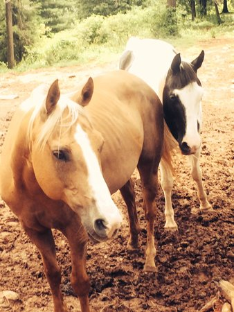 Adventure Trail Rides: Sweet Horses