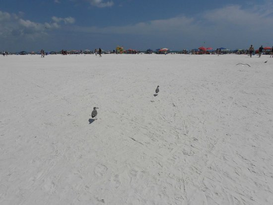 Siesta Beach: una spiaggia meravigliosa
