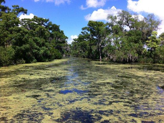 Louisiana Tour Company : Bayou