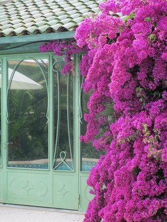 La Villa Mauresque : plantings at the children's pool