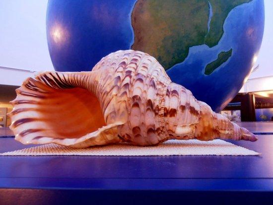 The Bailey-Matthews National Shell Museum: conchiglia gigantesca