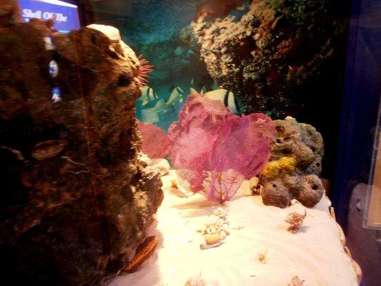 The Bailey-Matthews National Shell Museum: acquario